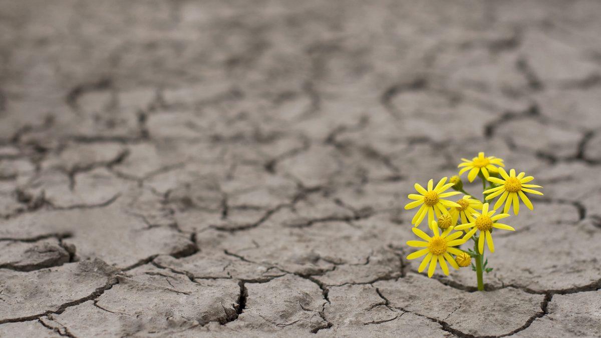 """""""Apuéstale a la resiliencia empresarial"""""""